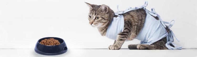 Чем отличается корм для стерилизованных кошек?