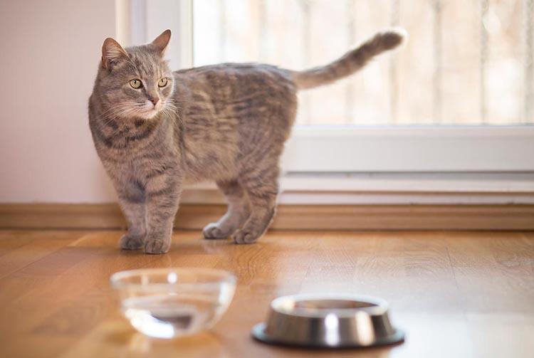 Что делать, если кошка перестала есть сухой корм?