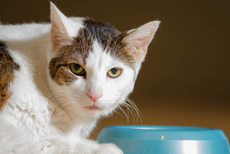 Как провести самостоятельно анализ сухих кормов для кошек?