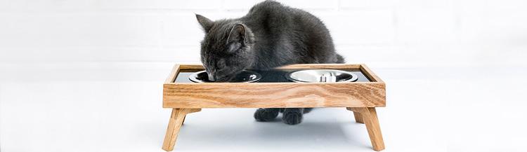 Какие есть корма для кошек?