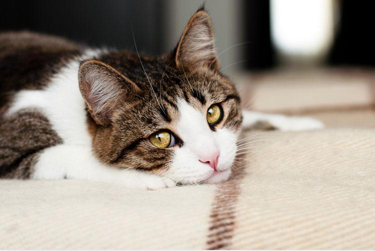 Кошка плохо ест сухой корм — основные причины