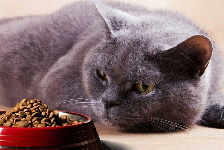 Кот перестал есть сухой корм — выясняем причины