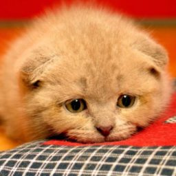 Котёнок плохо ест сухой корм — в чём причина?