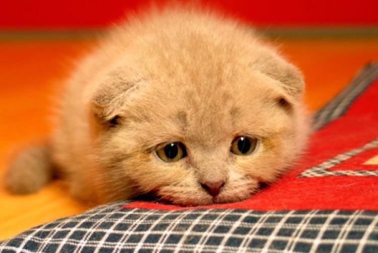 Котёнок плохо ест сухой корм — в чём причина