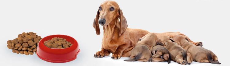 Можно ли кормящую собаку кормить сухим кормом?