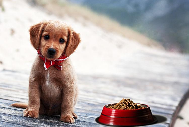 Почему щенок не набирает вес на сухом корме?
