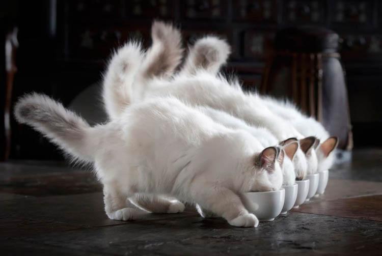 Рейтинг кормов для кошек — как найти лучший
