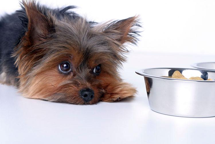 Собака плохо ест сухой корм — что делать?