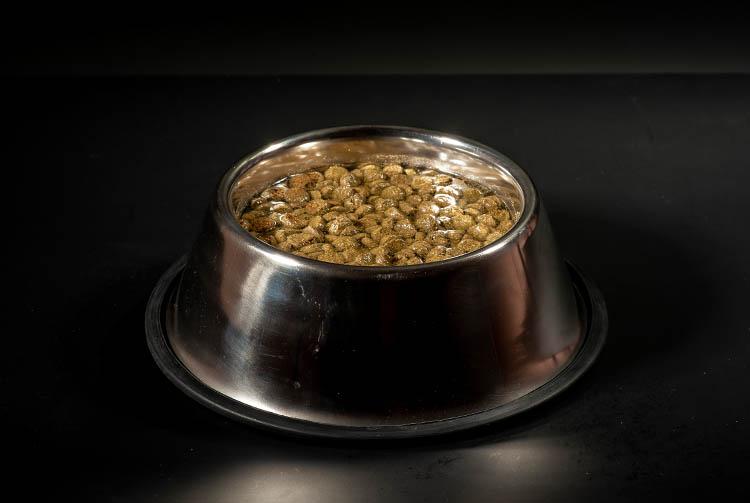 Как размочить сухой корм в воде?