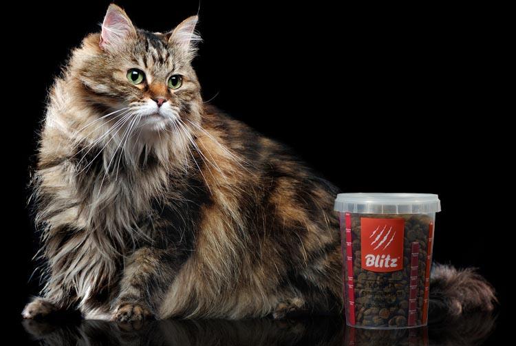Норма сухого корма для кота