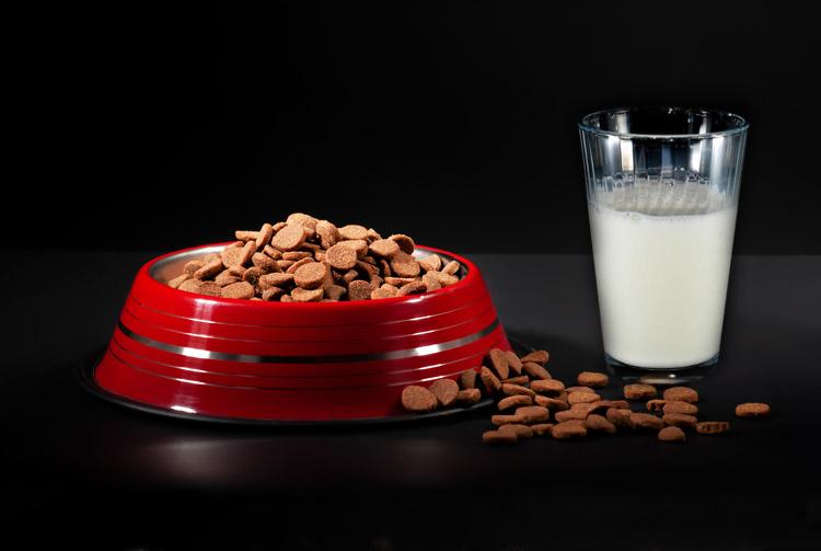 Можно ли сочетать сухой корм и молоко?