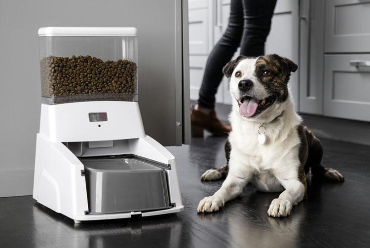Автоматическая кормушка для сухого корма