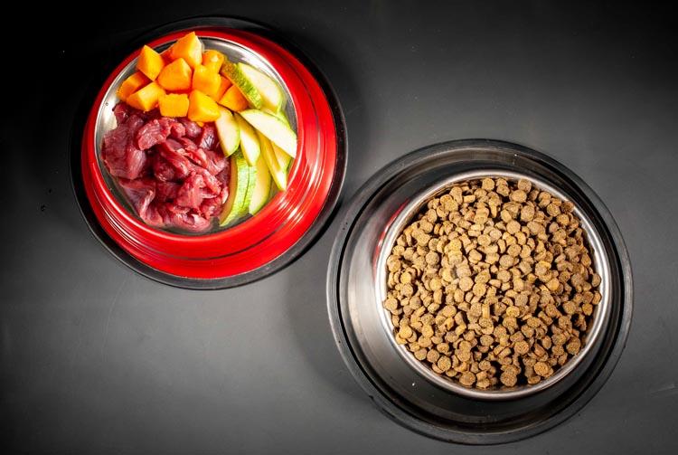 Cухой корм или натуралка — что лучше для питомца