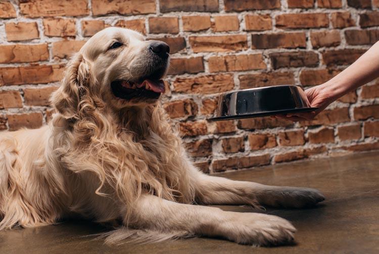 Кормление сухим кормом: рацион собаки