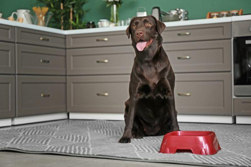 Cухой и влажный корм для собак