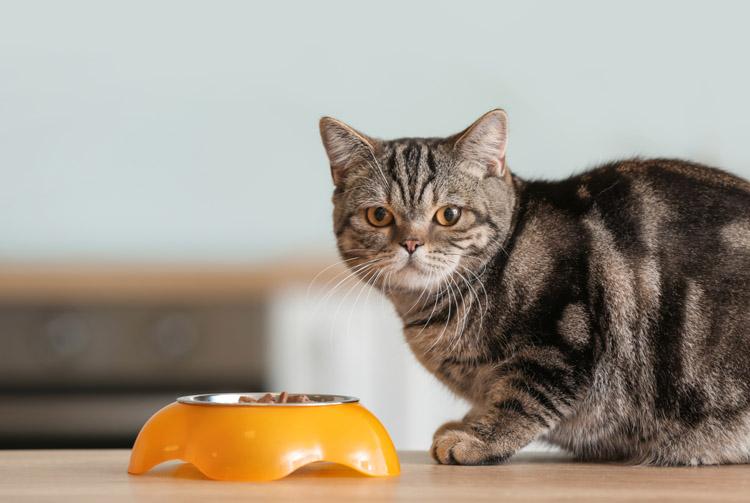 Как правильно сочетать сухой корм и консервы для кошки