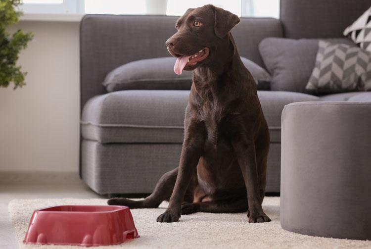 Рацион питания взрослой собаки