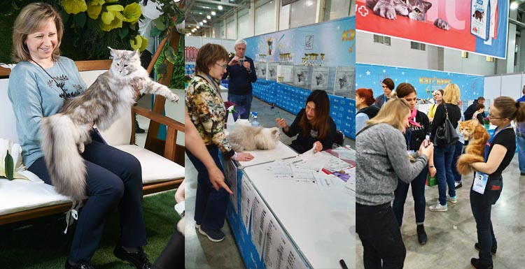 Юбилейная выставка кошек Кэтсбург 2020