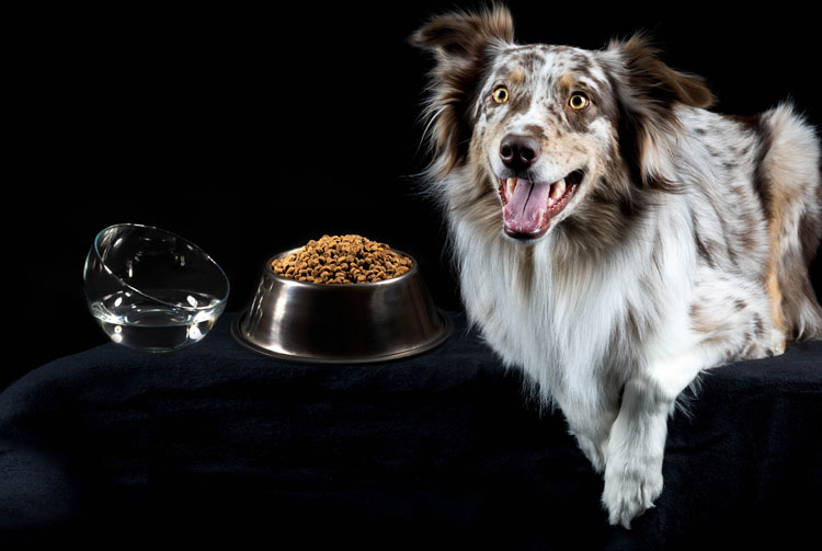 Из чего должен состоять правильный рацион собаки?