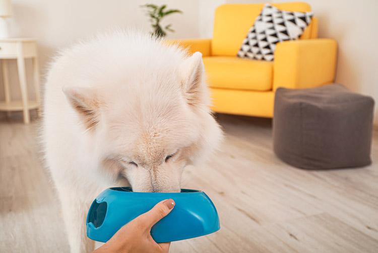 Рацион для собаки крупной породы