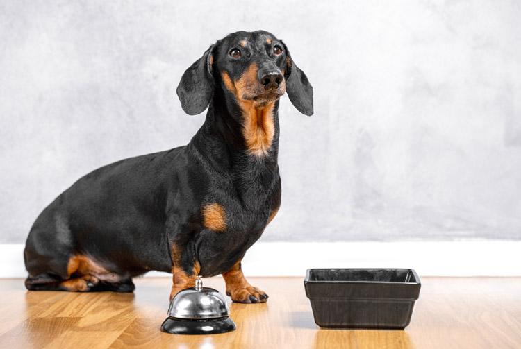 Рацион мелких собак: потребности и нюансы