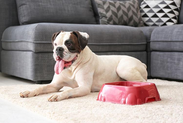 Рацион питания для собак средних пород