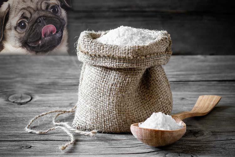 Нужна ли соль в рационе собаки