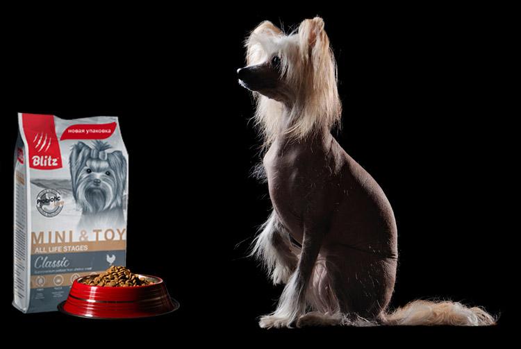 Питание китайской хохлатой собаки