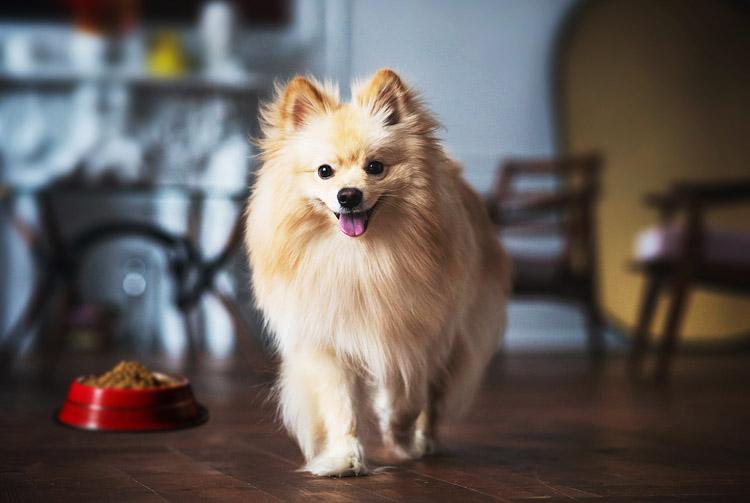 Питание собак породы шпиц
