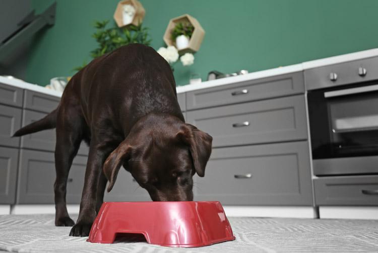 Как подобрать рацион для большой собаки?