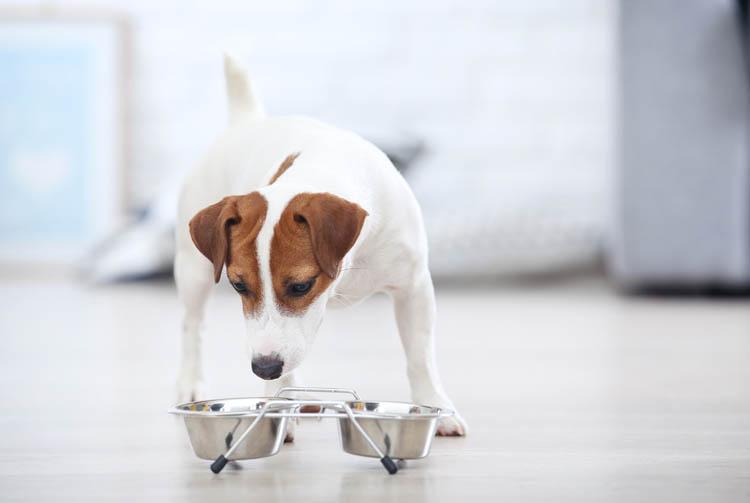 Что значит питание собаки без белка?