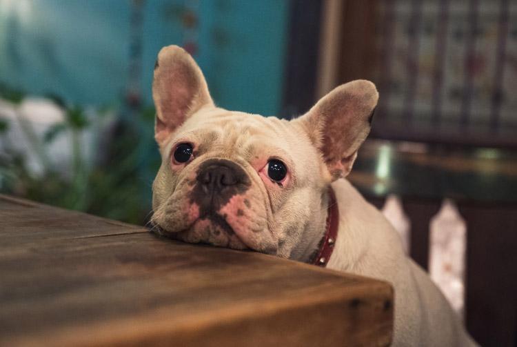 Неправильное питание собак: пять примеров