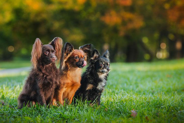 Питание собак в питомнике: предложение Blitz для заводчиков