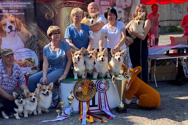 Blitz на выставке собак в Ивантеевке 11 июля 2020 года
