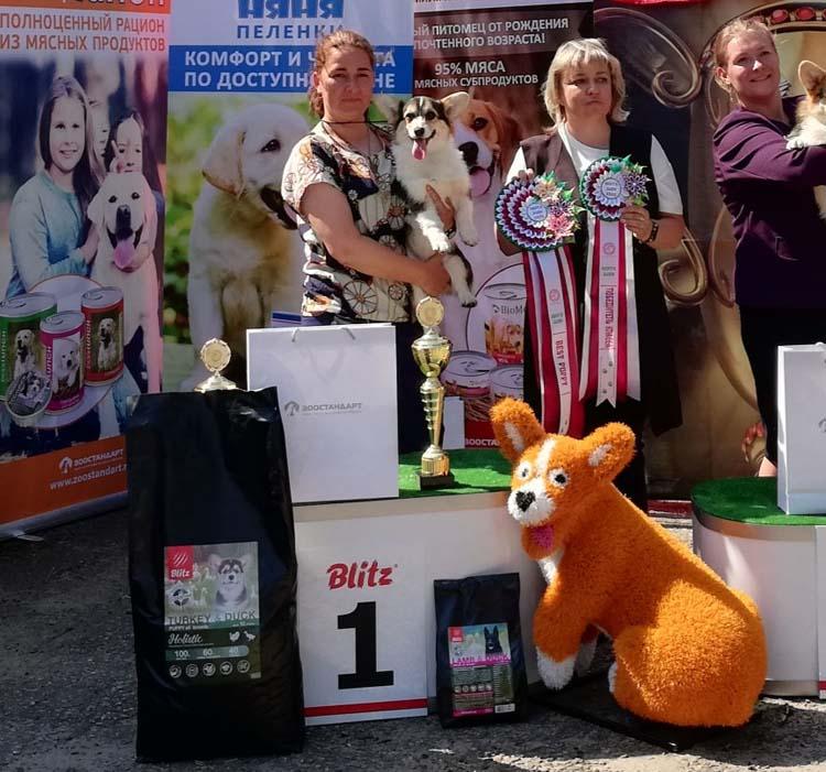 Лучший щенок на выставке собак в Ивантеевке 11 июля 2020 года