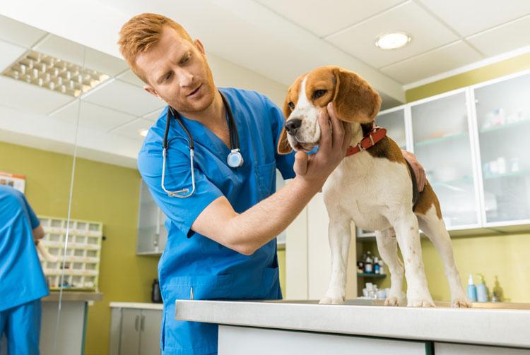Питание собаки при аллергии
