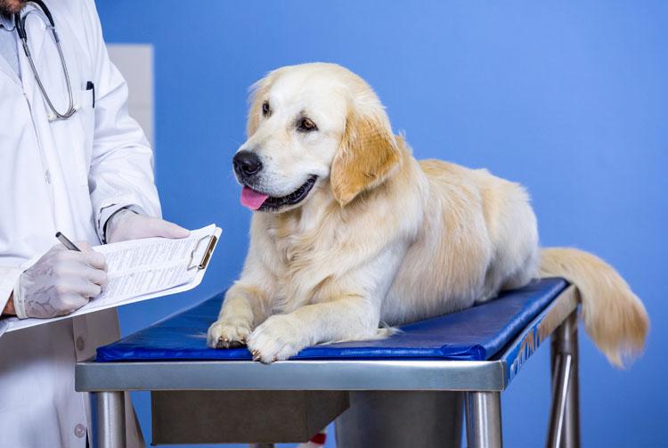 Почему собака худеет при хорошем питании