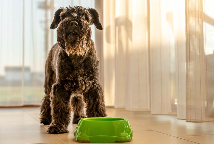 Привередливая собака в питании: причины и рекомендации