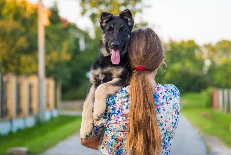 Рацион питания щенка ВЕО