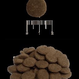 Blitz: сухой корм для взрослых собак всех пород с говядиной и рисом