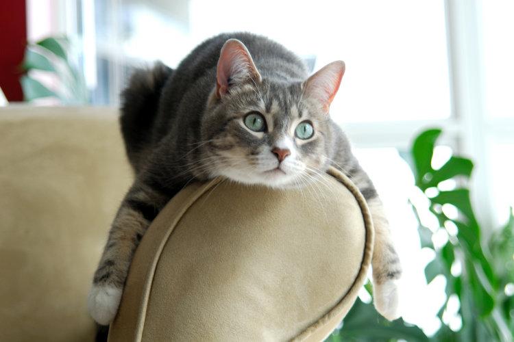 Правильное питание для кошки — как выбрать рацион?