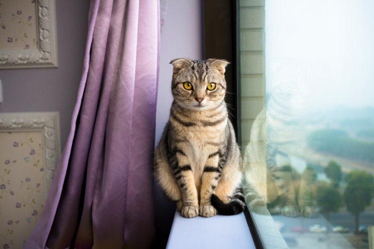 Правильный рацион стерилизованной кошки