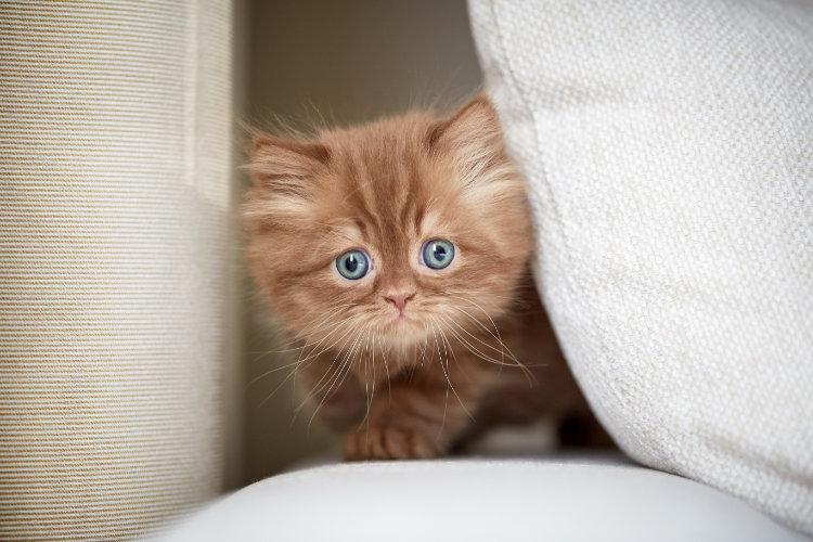 Рацион маленького котёнка — от рождения до трёх месяцев