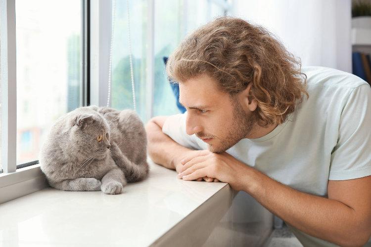 Рацион питания кошек: основные принципы