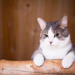 Норма кормления стерилизованной кошки