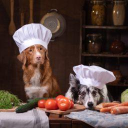 Нужны ли овощи в рационе собаки?