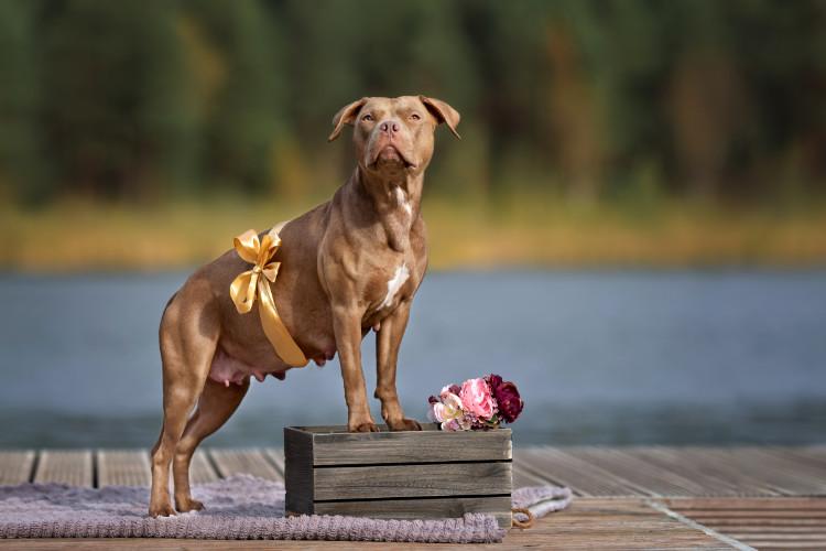 питание беременной собаки