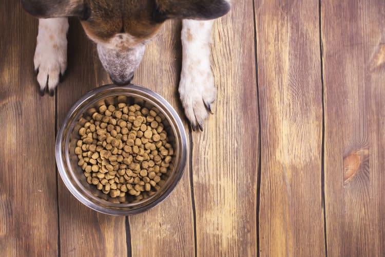 питание домашней собаки