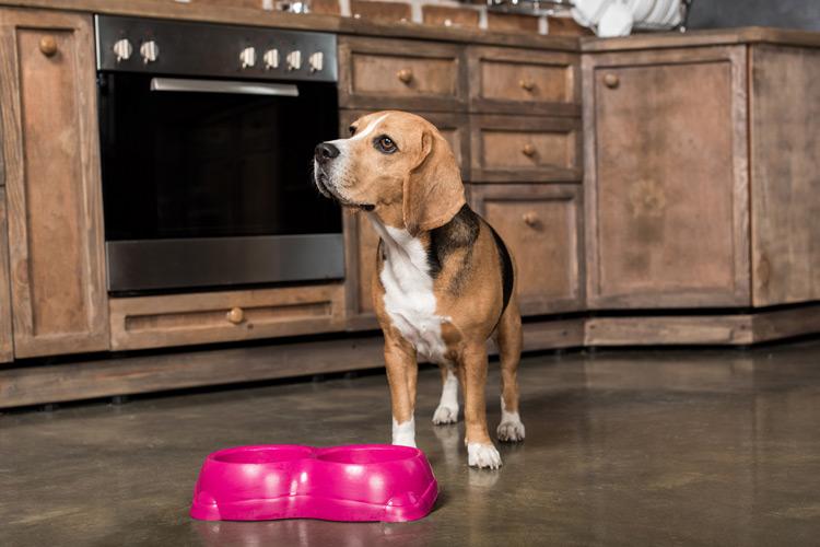 Когда переводить собаку на 2-разовое питание?