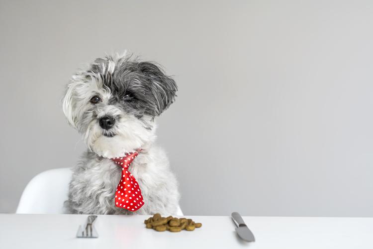 Питание собаки сухим кормом